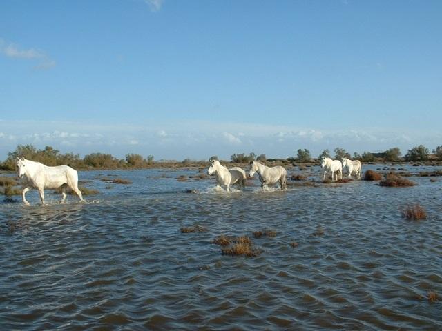 Promenade plage et marais pour confirmés - promenade à cheval en Camargue