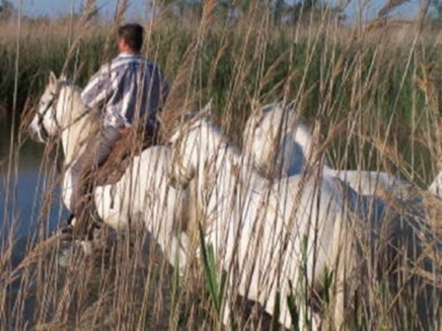 BON CADEAU  Balade de  2H15 pour 1 personne - balade à cheval en Camargue