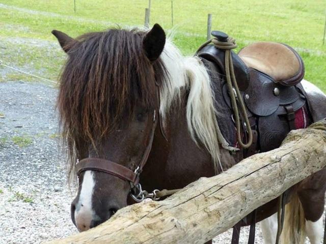 Poneys pour les tout petits -  à cheval en Camargue